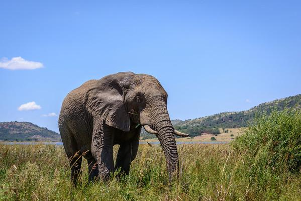 Pilanesberg-20130217-0304