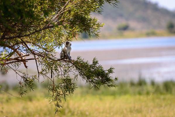 Pilanesberg-20130217-0158