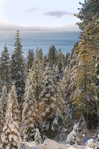 Tahoe Trees-10