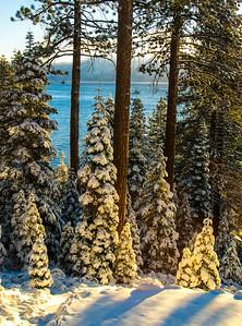 Tahoe Trees-2