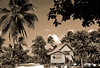 """Tropical Home Sepia"" Thatched village hut amidst majestic coconut palms on Honaira, Solomon Islands."