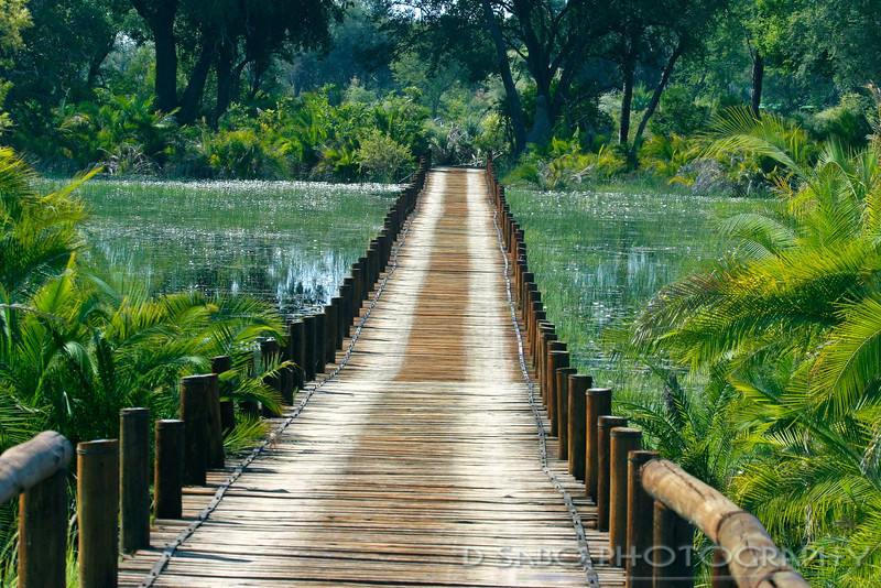 "The Bridge to Jao""  During the spring flood waters of the Okavango Delta this bridge is the only access to Jao Camp, Botswana, Africa"
