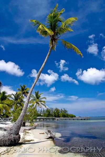 """Utila Leaning Palm""  Leaning Palm on the island Utila, Bay Islands, Honduras"