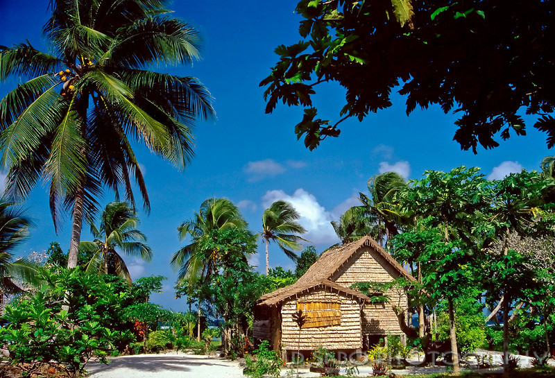 """Tropical Home"" Thatched village hut amidst majestic coconut palms on Honiara, Solomon Islands."