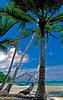 """Uepi Hammock""  An inviting hammock on Uepi Island in the beautiful Marovo Lagoon in the Western Province of the Solomon Islands"