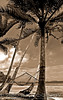 """Uepi Hammoch Sepia"" An inviting hammock on Uepi Island in the beautiful Marovo Lagoon in the Western Province of the Solomon Islands"