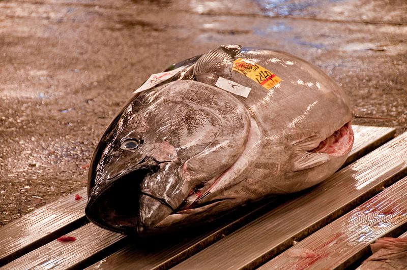 Tsujiki Fish Market-12