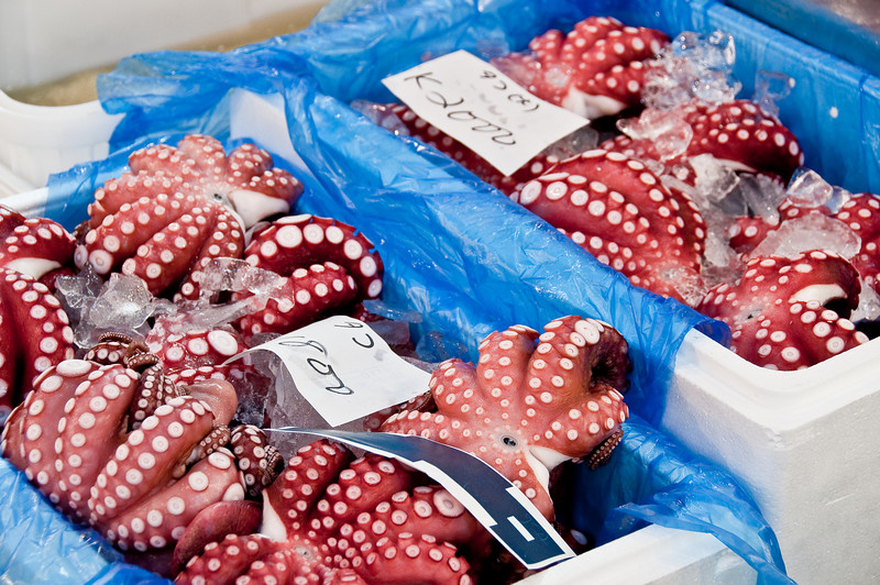 Tsujiki Fish Market-22