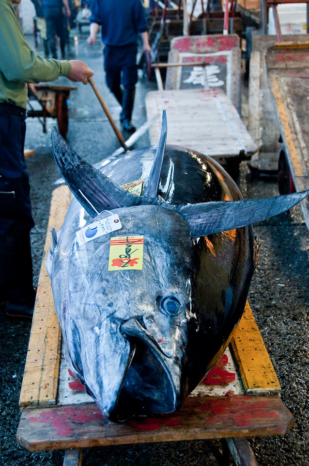 Tsujiki Fish Market-10