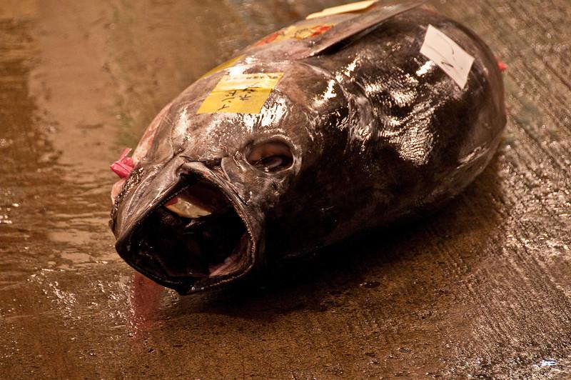 Tsujiki Fish Market-5