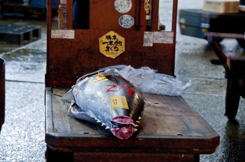 Tsujiki Fish Market-16