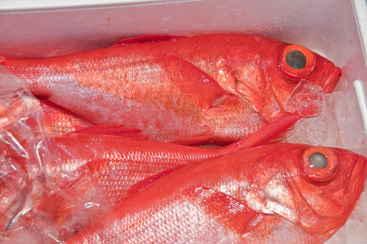 Tsujiki Fish Market-28
