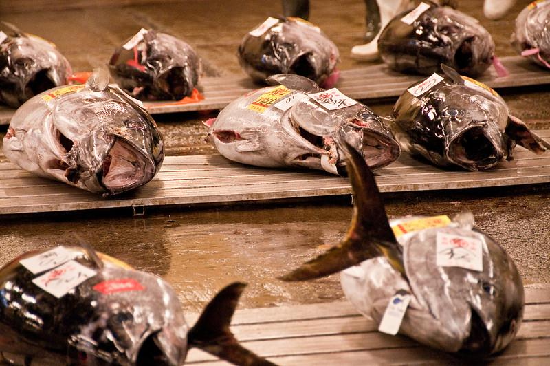 Tsujiki Fish Market-8