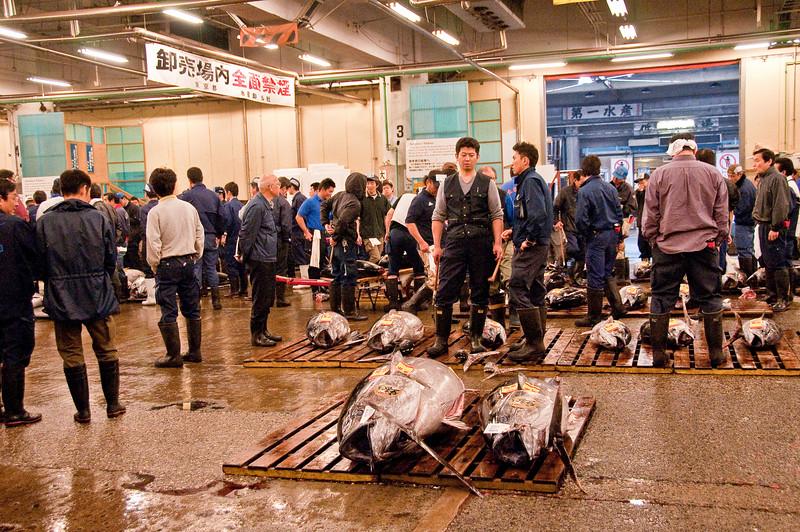Tsujiki Fish Market-7