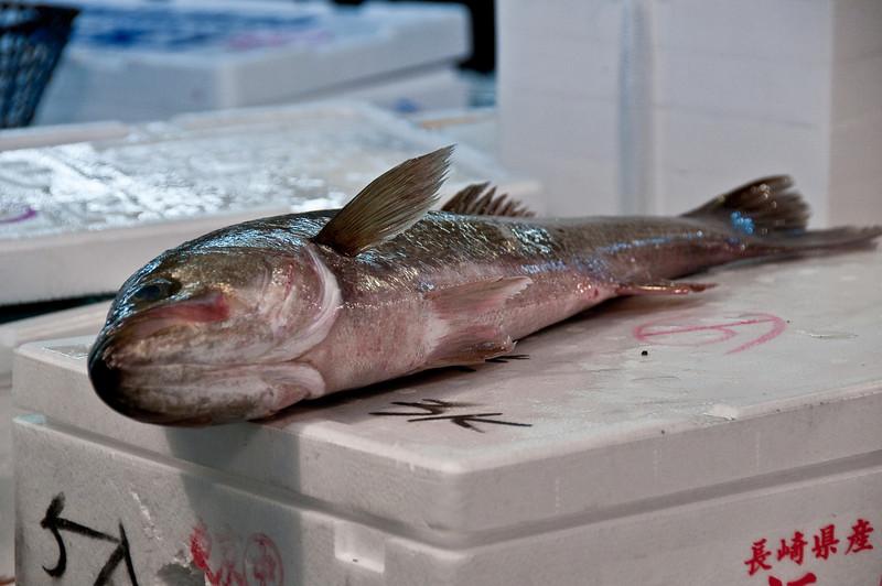 Tsujiki Fish Market-31