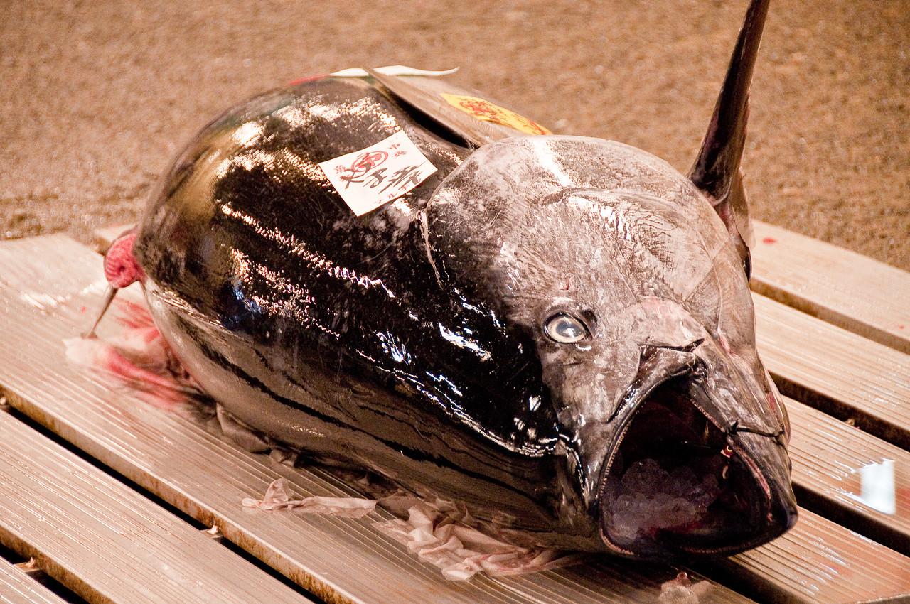Tsujiki Fish Market-9