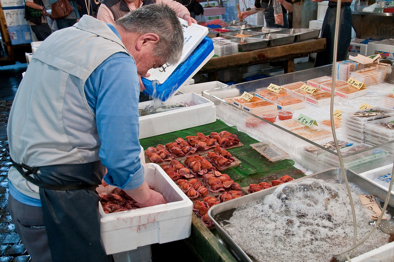 Tsujiki Fish Market-23