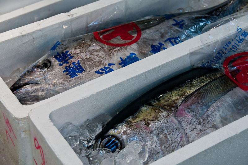 Tsujiki Fish Market-27