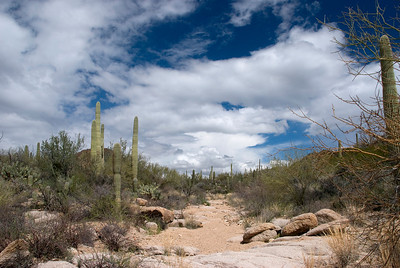 We take a short hike in the Saguaro National Park. Ambling down a wash.