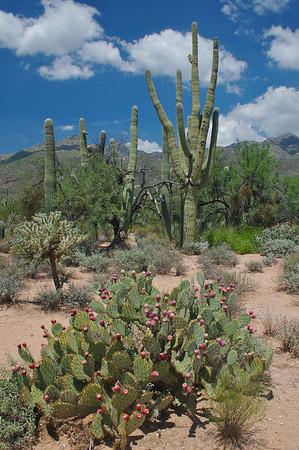 Tucson & Phoenix, Arizona