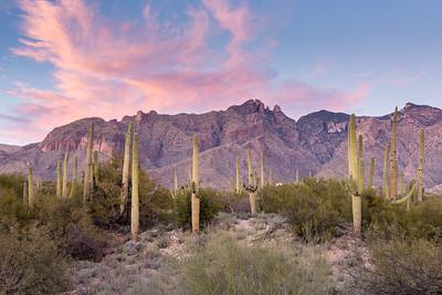 Tucson 2016
