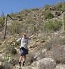 Saguaro (Carnegia gigantem) Cactaceae