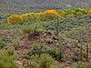 Saguaro NP - East