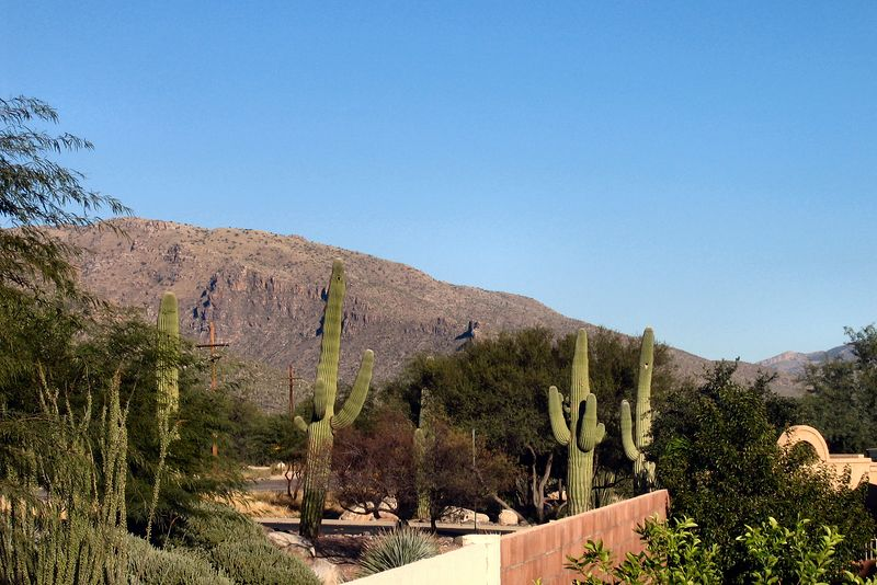 View of the Catalina Mountains from Judy's backyard.