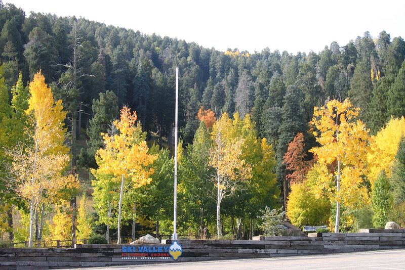 Fall colors at Ski Valley on Mt. Lemmon
