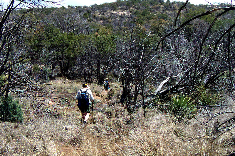 Hiking though an old burned section on the ridge.