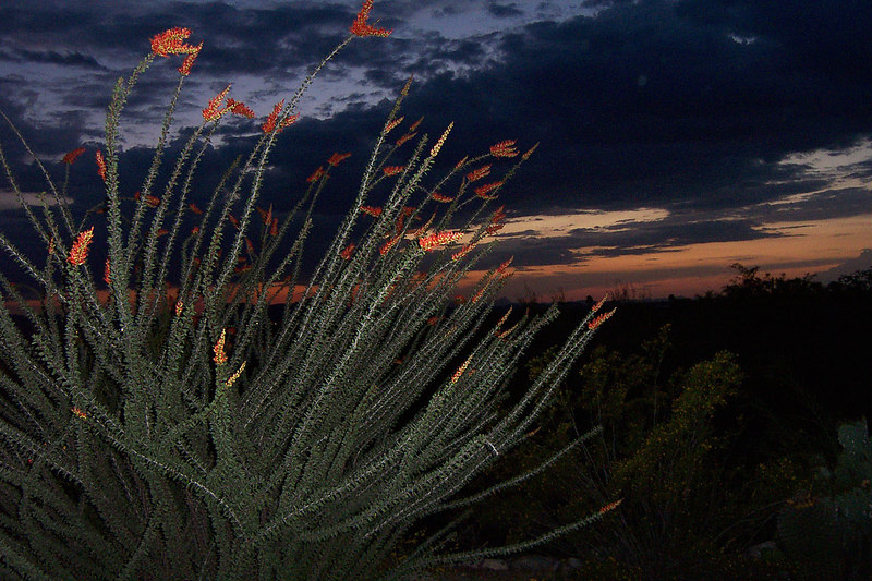 Another sunset shot with flash to light up the ocotillo.