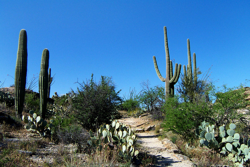 The best part of the hike were the saguaros. There were a lot of them at the lower elevations.
