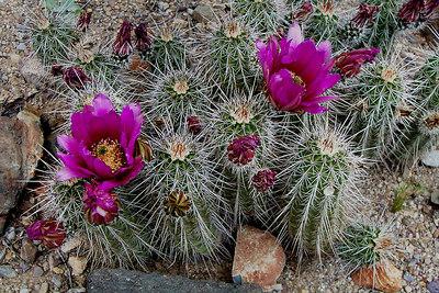 Tucson - Biosphere, Tanque Verde Peak & Sonora Museum 4/9/04-4/11/04