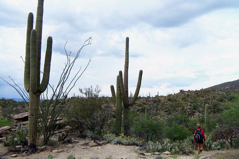 Some nice looking saguaros near the end of the hike. The lightning and the little rain we got made it a fun hike. Now it's time for dinner. After dinner we soaked in the jacuzzi.