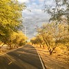 Rio Rillito path