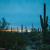 Saguaro NP West