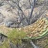 Honeybee Canyon