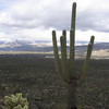 Saguaro, Cholla and the Mountains