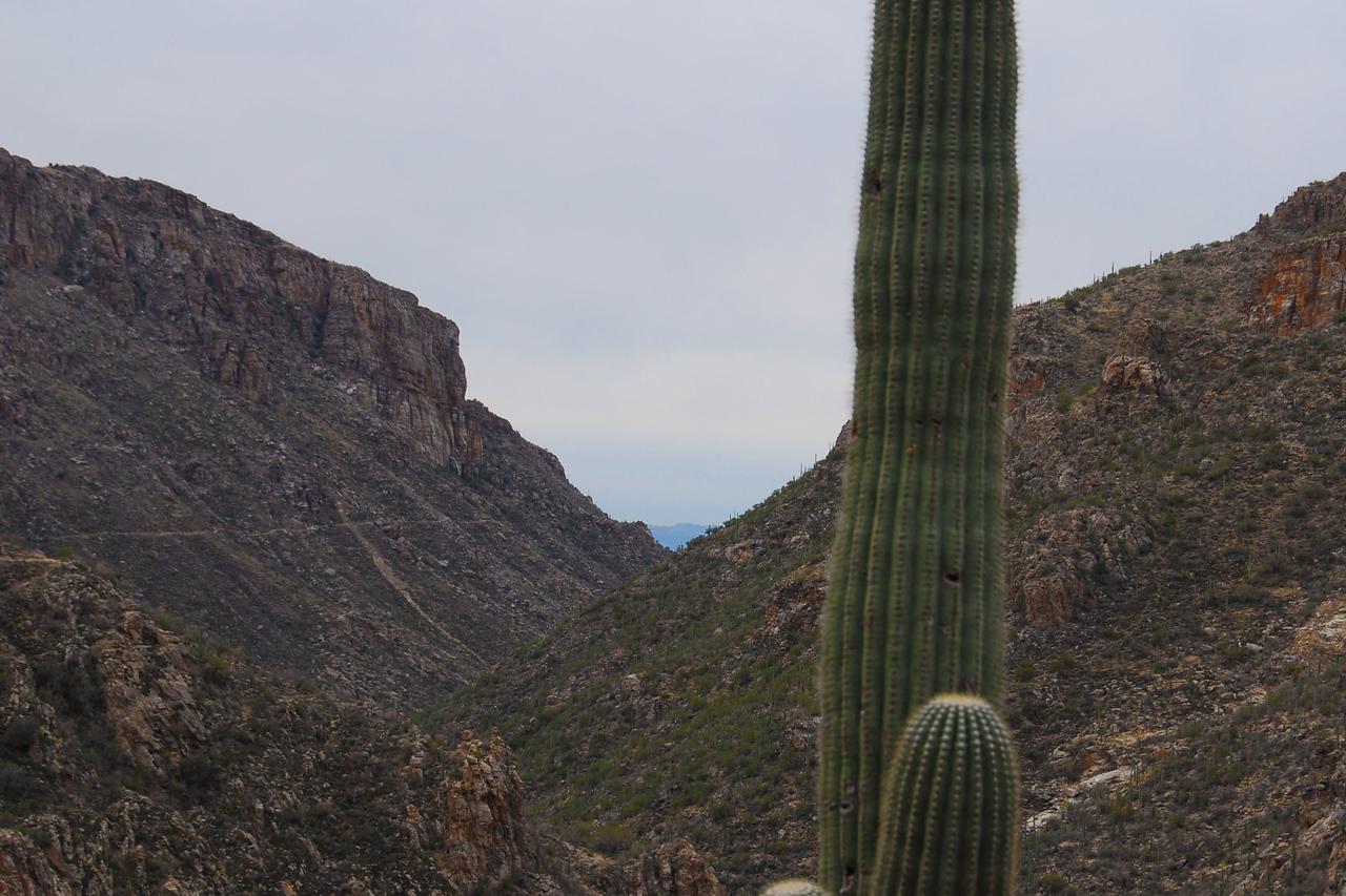 Hiking Sabino Canyon.