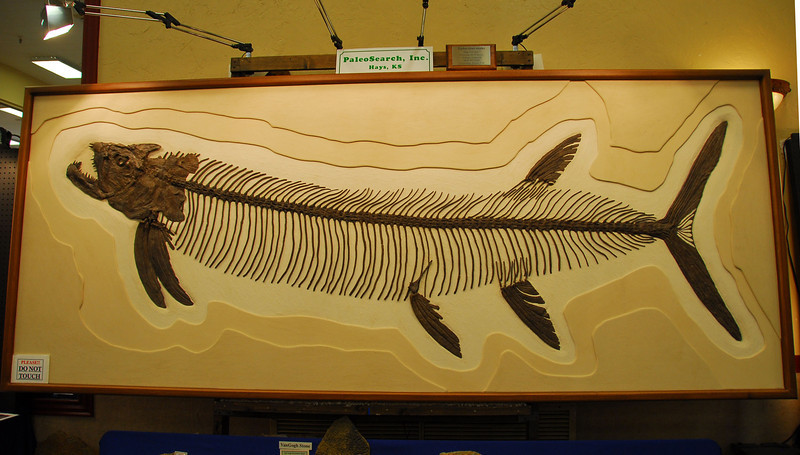 This fossilized fish was at least ten feet long and meticulously presented. You can take it home for <br /> $130,000.