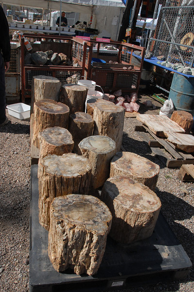 Petrified wood, approximately one to two feet tall.