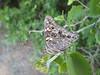<b>Butterfly</b><br>