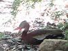 <b>Bird Squawking</b><br>