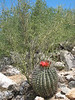 <b>Cacti!</b><br>