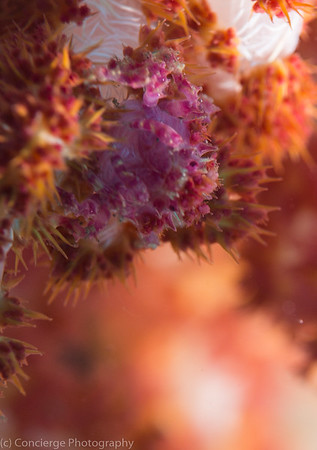 Tulamben Bali Indonesia with Bali Coral Divers