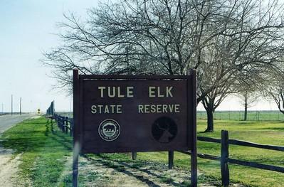 tule_elk_SR0003