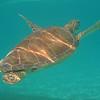 Snorkeling with sea turtles at Half Moon Bay, Akumal - Edventure Tours