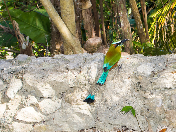 Gran Bahia Principe Resort & Tulum