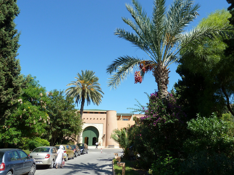 Note the date palm