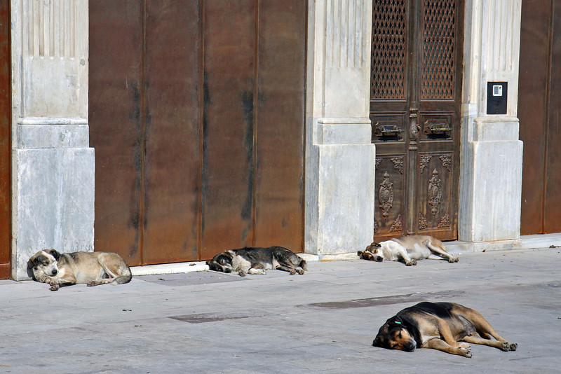 Dog day afternoon in Istanbul